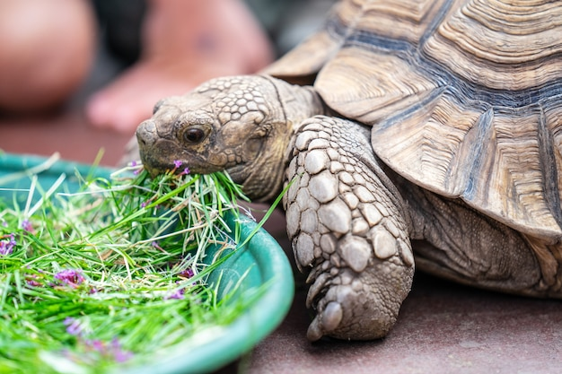 Kinder füttern schildkröte in edinburgh butterfly und insect world.ausgewählter fokus Premium Fotos