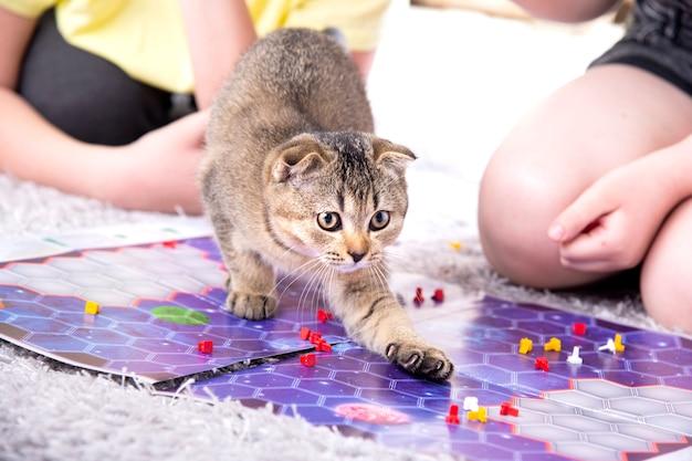 Kinder spielen mit einem britischen kleinen verspielten kätzchen zu hause auf dem teppich.