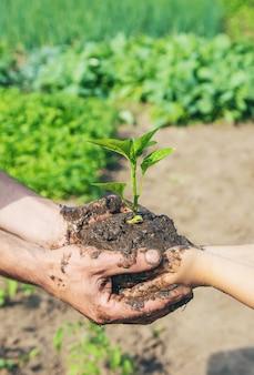Kinder- und vaterpflanzen im garten.