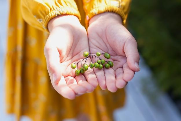 Kinderhände, die frische grüne beeren halten. ernte. herbst.