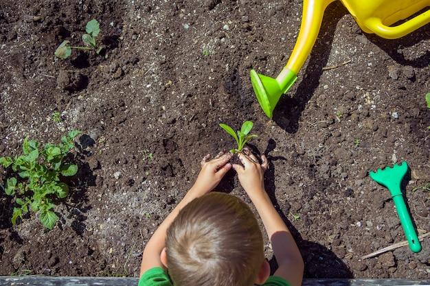 Kinderhände, die sämlinge im boden pflanzen. tag der umwelt der erde. planetenkonzept speichern. kinderbetreuung junger baum auf dem boden,