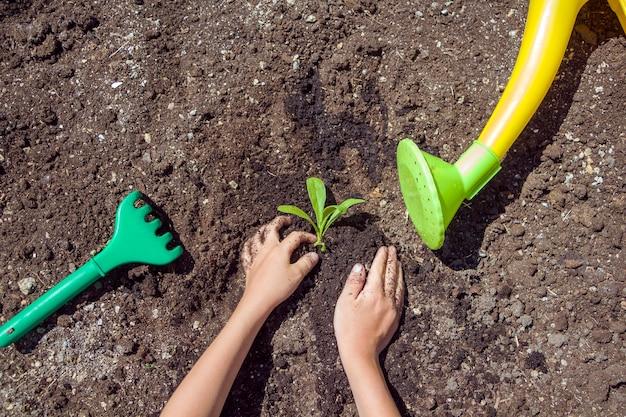 Kinderhände, die sämlinge in erde pflanzen