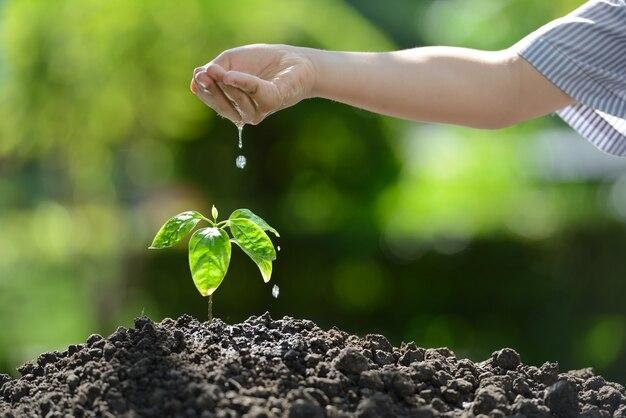 Kinderhand, die eine junge pflanze gießt