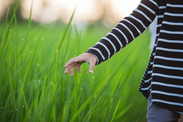 Kinderhand im reisfeld
