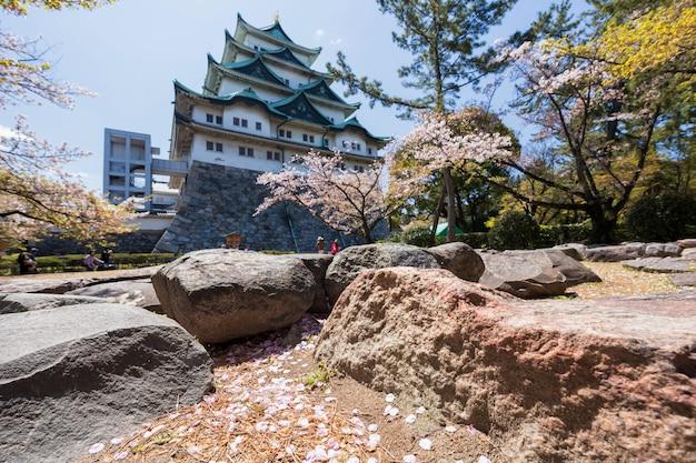 Kirschblütenblumenblätter mit nagoya-schloss