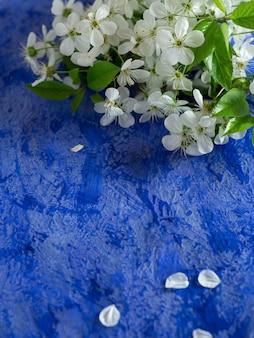 Kirschblütenniederlassung auf blauem konkretem hintergrund mit copyspace