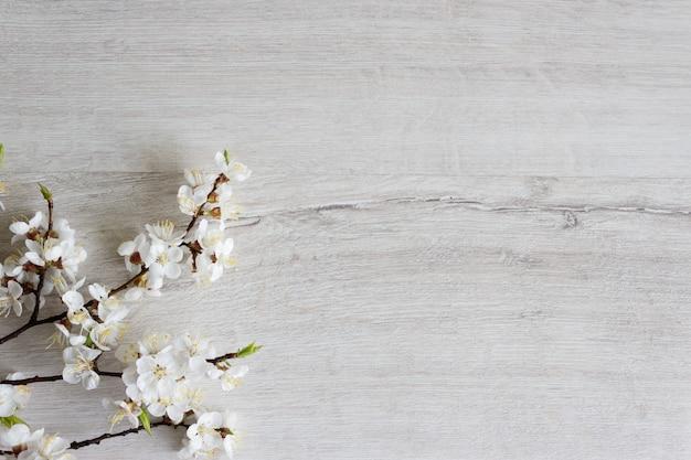 Kirschblütenzweig, frühling