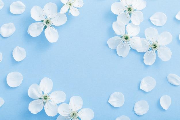 Kirschblumen auf papierhintergrund