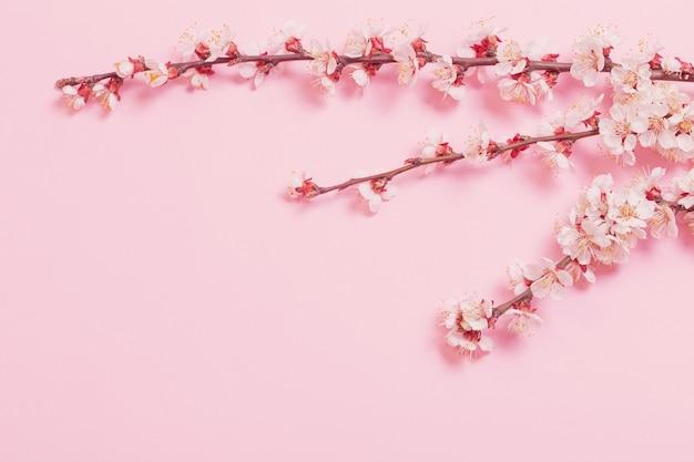Kirschblumen auf rosa papierhintergrund