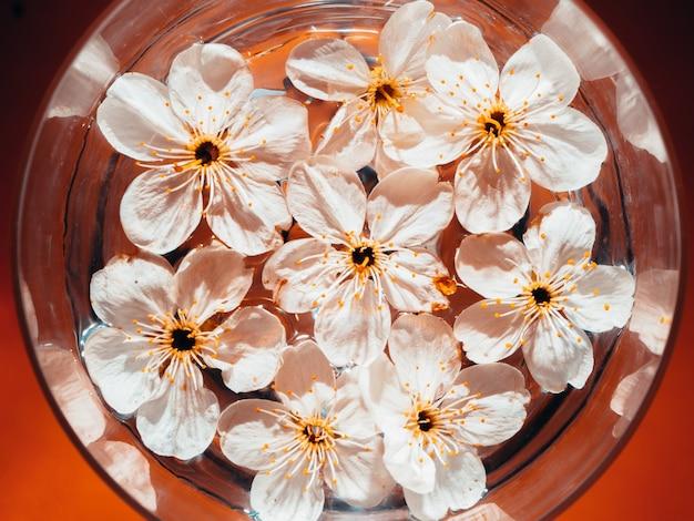 Kirschblumen schweben in einem glas wasser auf einem orangefarbenen hintergrund. draufsicht.