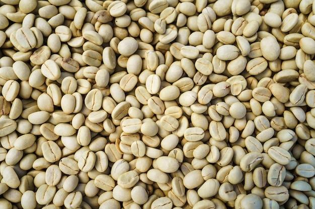 Kirschkaffeebohnen, trockener prozesskaffee mit roter kaffeereife