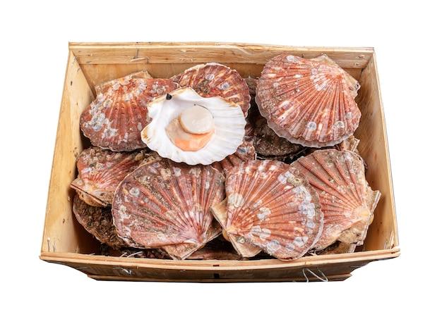 Kiste voller frischer jakobsmuscheln auf einer weißen oberfläche
