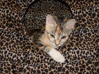 Kitty cat, verspielt