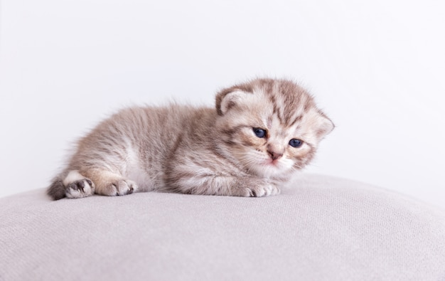 Kitty katze auf dem kissen.