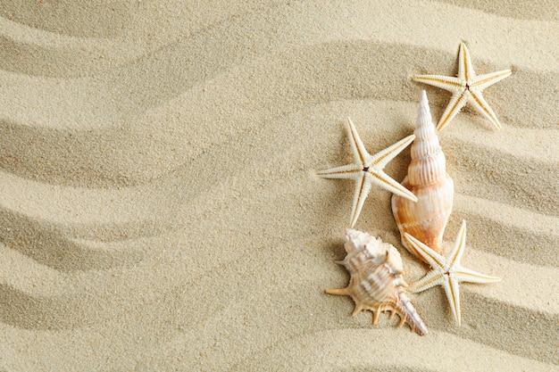 Klarer meersand mit muscheln und seesternen, platz für text. sommerferienhintergrund