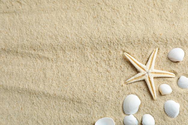 Klarer meersand mit seesternen und muscheln, platz für text und draufsicht. sommerferienhintergrund