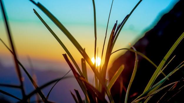 Klares grünes gras bei sonnenuntergang