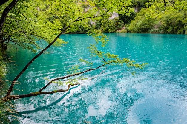 Klares wasser von plitvicer seen, kroatien