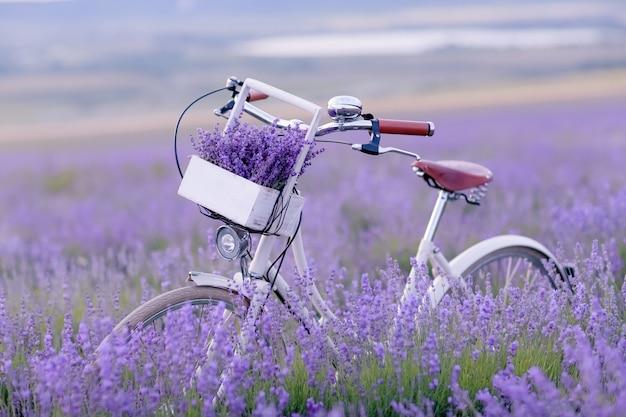Klassisches fahrrad steht in einem feld mit lavendel nahaufnahme