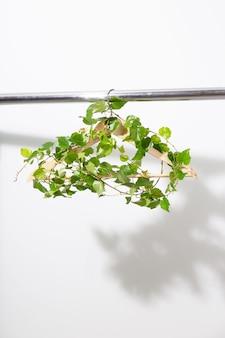 Kleiderbügel mit grüner pflanze, die an einer weißen wand hängt