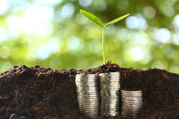 Kleine bäume auf einem stapel münzen.