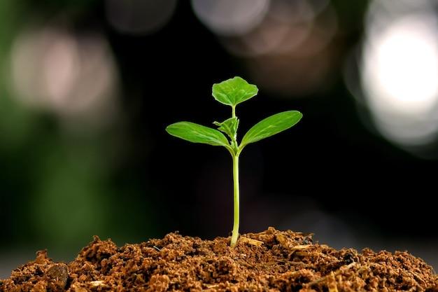 Kleine bäume mit grünen blättern, natürlichem wachstum und sonnenlicht, das konzept der landwirtschaft und des nachhaltigen pflanzenwachstums.