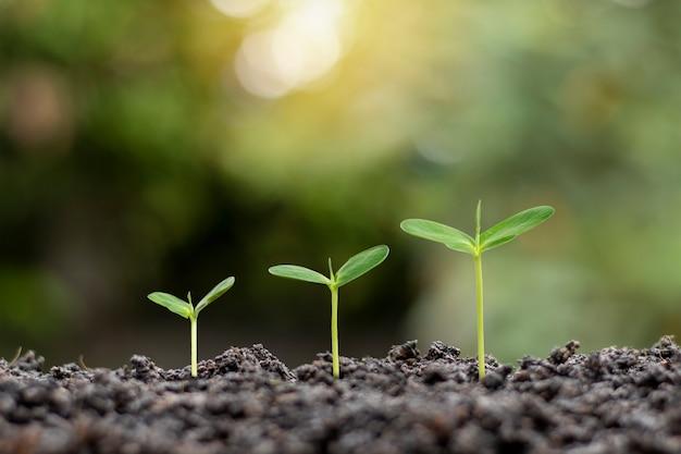 Kleine bäume unterschiedlicher größe wachsen auf grünem hintergrund