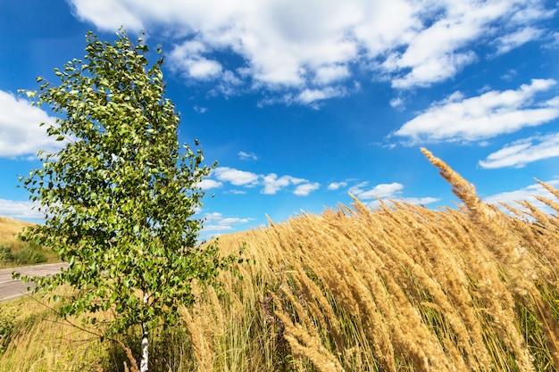 Kleine birke auf dem gebiet nahe der straße mit wolken und blauem himmel. sommerlandschaft.