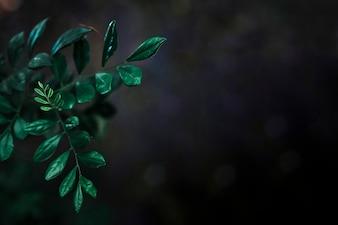 Kleine Blätter auf schwarzem Hintergrund