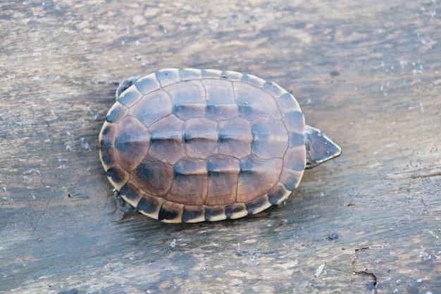 Kleine braune schildkröte lebt auf dem alten klotz in einem kleinen teich