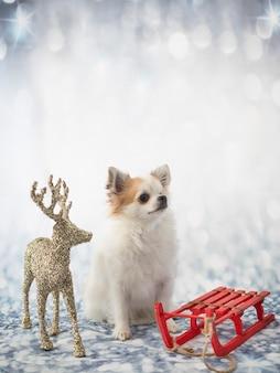 Kleine chihuahua vor dem winter