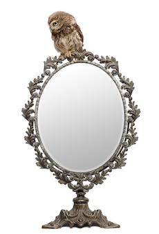 Kleine eule athene noctua mit einem spiegel