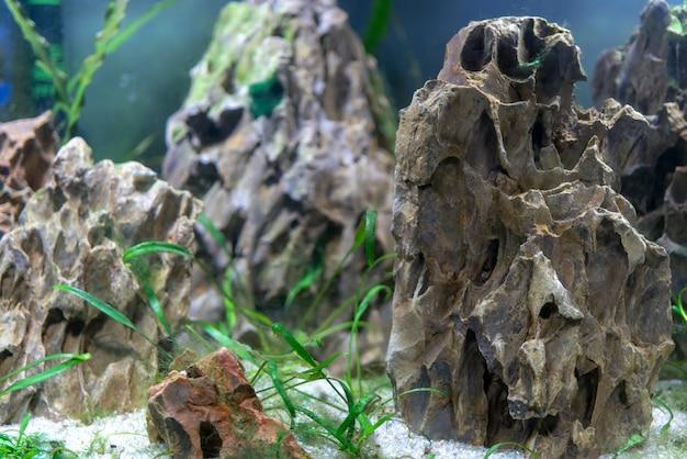 Kleine fische im aquarium.