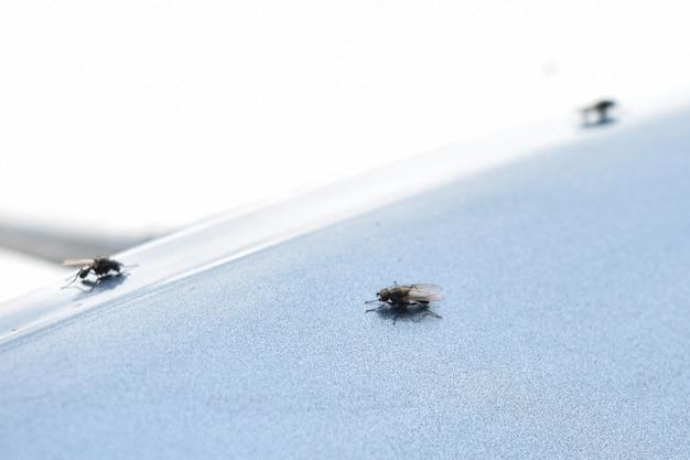 Kleine fliegen auf hellem hintergrund