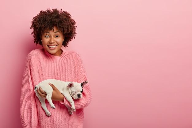 Kleine französische bulldogge auf hostessenhänden. junge frau mit afro-haarschnitt petts kleiner hund