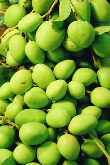 Kleine frische grüne mangos. mangifera indica l. var.