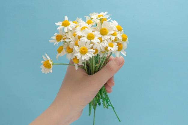 Kleine gänseblümchen in frauenhand