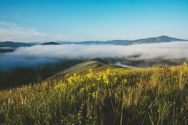 Kleine gelbe blumen blühen auf wiese auf bergspitze gegen hintergrund des starken nebels über abgrund. dunst am horizont. atmosphärische landschaft der schönen majestätischen natur des hochlands mit nebel.