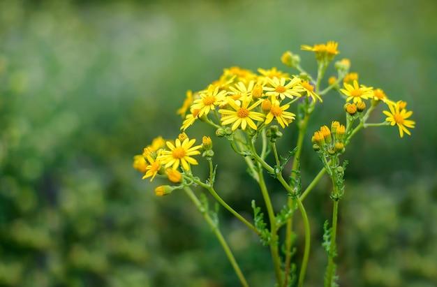 Kleine gelbe blumen im feld