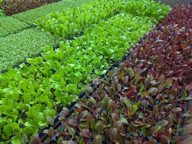 Kleine gemüsesämlinge zum pflanzen