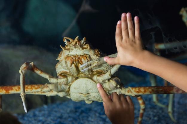 Kleine geschwister, die aquarium betrachten
