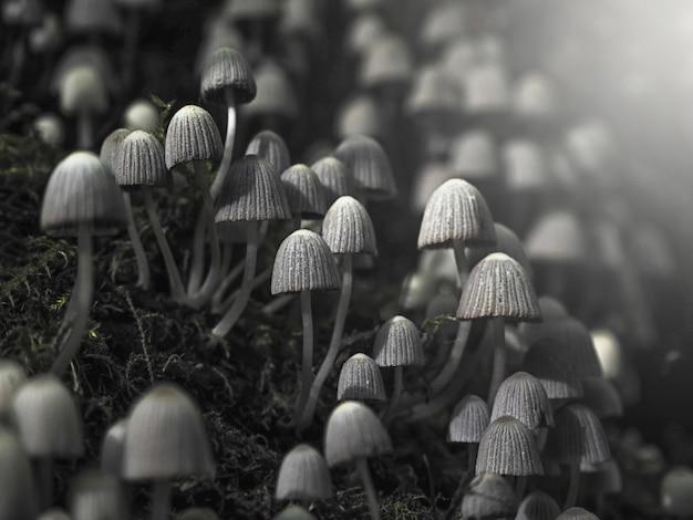 Kleine giftpilze giftpilz auf dunklem hintergrund