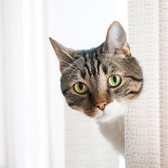Kleine grau gestreifte und neugierig aussehende katze