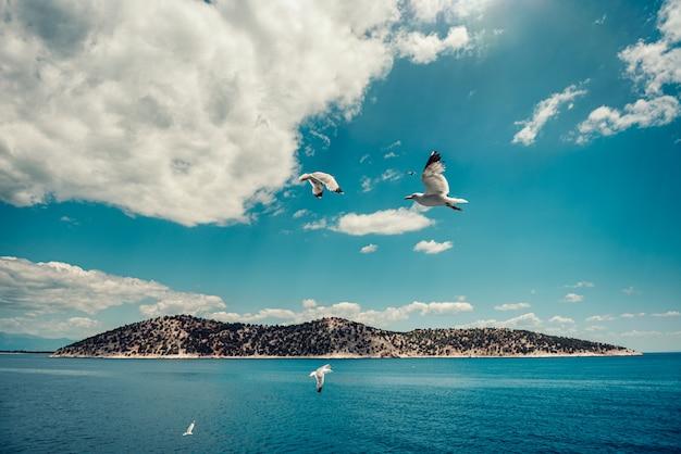 Kleine griechische insel mit den seemöwen, die in den himmel fliegen