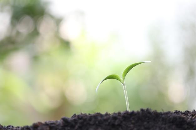 Kleine grün wachsende pflanze mit wassertropfen