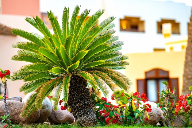 Kleine grüne palme, umgeben von leuchtend blühenden blumen