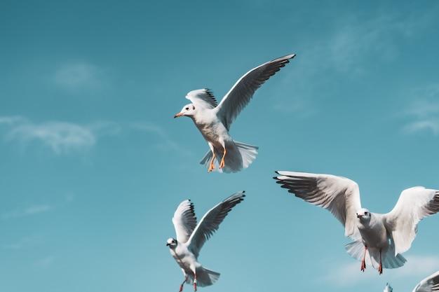 Kleine gruppe schwarzköpfiger möwen fliegt