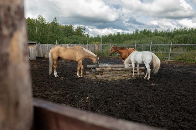 Kleine gruppe von hauspferden verschiedener farben, die in ländlicher umgebung mit wald auf und wolken oben essen