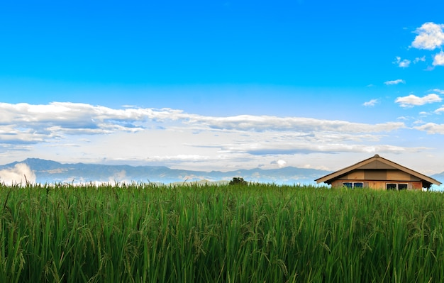 Kleine häuser, reisfelder und schöne natur im tal. hintergrundbild der gelassenheit