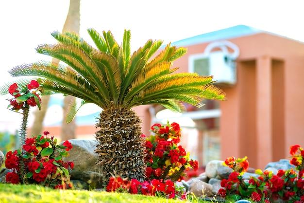 Kleine hellgrüne palme, umgeben von leuchtend blühenden blumen, die auf grasbewachsenem rasen im tropischen hotelhof wachsen.